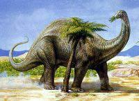 Me gusta imaginar que soy un apatosaurio cuando como brócoli.